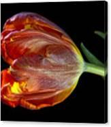 Parrot Tulip 6 Canvas Print