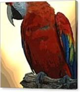 Parrot Watching Canvas Print
