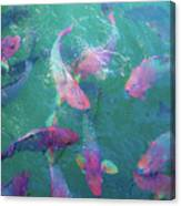 Parrotfish Of The Keys Canvas Print