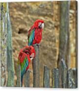 Parrots, Doue-la-fontaine Zoo, Loire, France Canvas Print
