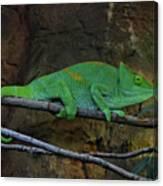 Parson's Chameleon Canvas Print