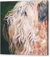 Pascal, Soft Coated Wheaten Terrier Canvas Print