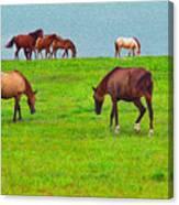 Paso Fino Horses Graze By Seaside Canvas Print
