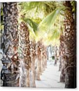 Pass Of Palms Canvas Print