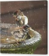 Pass The Towel Please: A House Sparrow Canvas Print