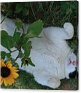 Passed Out Under The Daisies Canvas Print