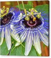 Passion Flower Power Canvas Print
