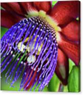 Passion Flower Ver. 11 Canvas Print