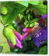 Passion Flower Ver. 14 Canvas Print