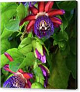 Passion Flower Ver. 16 Canvas Print