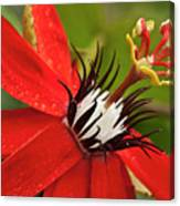 Passionate Flower Canvas Print