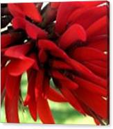 Passionate Red Canvas Print