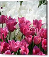 Passionate Tulips Canvas Print