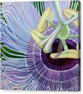 Passionflower Vine Canvas Print