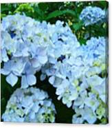 Pastel Blue Hydrangea Flowers Green Garden Floral Canvas Print
