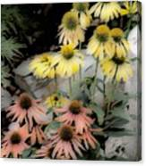 Pastel Cone Flowers Canvas Print