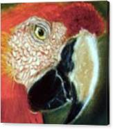 Pastel Of Red On The Head  Canvas Print