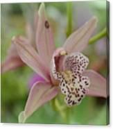 Pastel Orchid Canvas Print