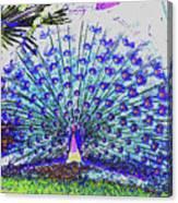 Pastel Peacock Canvas Print