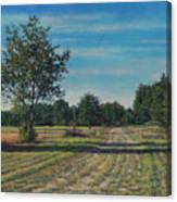 Pastoral Off Poplar Hill Road Canvas Print