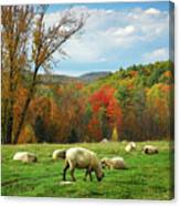 Pasture - New England Fall Landscape Sheep Canvas Print