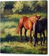 Pasture At Whites Crossing      Horse Painting Canvas Print