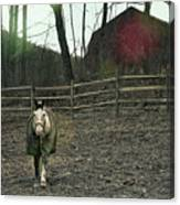 Pasture Pony Canvas Print