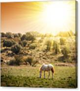 Pasturing Horse Canvas Print