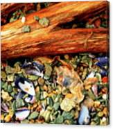 Patagonian Shore Canvas Print