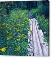 Path 4 Canvas Print