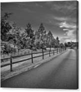 Path - Black And White Canvas Print