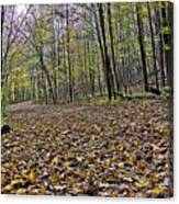 Path Home - Kettle Moraine 10-14-16 Canvas Print