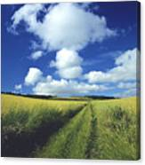 Path In A Countryside Canvas Print