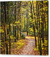 Path In Fall Forest Canvas Print