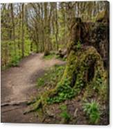 Path In Judy Woods Canvas Print