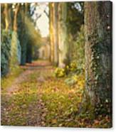 Path Into The Light Canvas Print