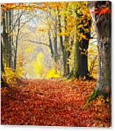 Path Of Red Leaves Towards Light In Fall Forest Canvas Print