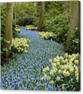 Path Of The Beautiful Spring Flowers Canvas Print