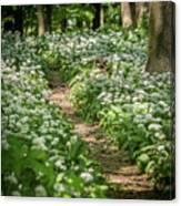 Path Through A Deciduous Forest, Wild Garlic Canvas Print