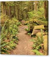 Path Through Mossy Forest Canvas Print