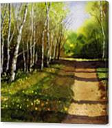 Path Through Silver Birches Canvas Print