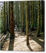 Path Through The Woods. Canvas Print