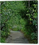 Path To Adventure Canvas Print