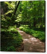 Path To Conkle's Hollow Canvas Print
