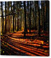 Path To Serenity - Nickerson State Park Canvas Print