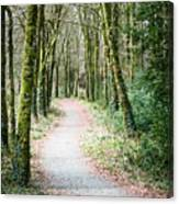 Path To The Forest Canvas Print