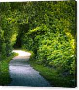 Path To The Secret Garden Canvas Print