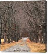 Pathway Through The Trees Canvas Print