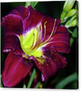 Patricia Neal Daylily Canvas Print