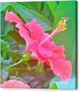 Pat's Hibiscus  Canvas Print